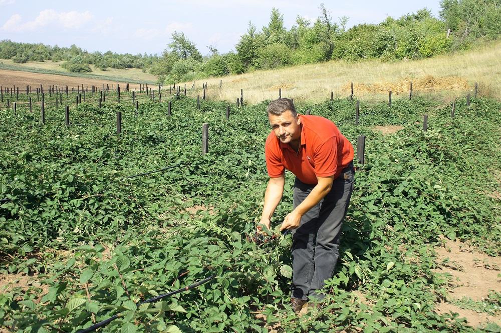 BiH: Potrebe za desecima hiljada tona žitarica, voća i povrća – Pšenica dominantna