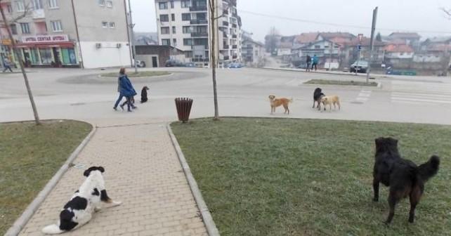 psi lutalice velika kladusa